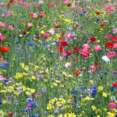 Northwest-Wildflower-Mix-by-walts-organic-fertilizers